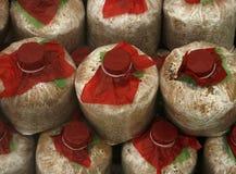 Infected mushroom bag Stock Photos