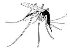 Infection de contagion de piqûre d'aile de mouche d'insecte de moustique illustration de vecteur