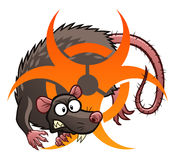Infectious rat Stock Photos