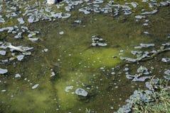 infekterat vatten Royaltyfri Bild