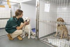 Infermiera di Vetinary che controlla gli animali ammalati in penne Fotografia Stock