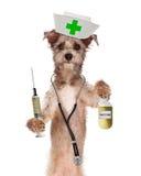 Infermiere Shot del cane e bottiglia del vaccino Fotografie Stock