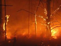 Inferno nella foresta immagine stock