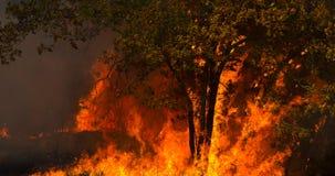 Inferno, un albero inghiottito dalla fiamma fotografia stock libera da diritti