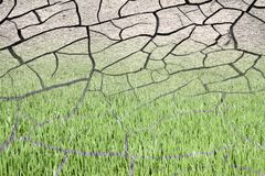 Infertile land burned by the sun: desertification concept Stock Image
