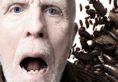 Infestation Horror Stock Photography