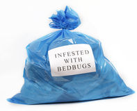 Infested with bedbugs royalty free stock image