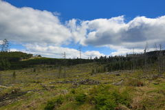 Infested trees, the forested, hilly landscape near Lake Laka, Šumava, Czech Republic Stock Photography