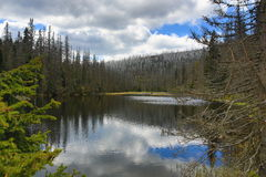 Infested trees, hilly landscape, Lake Laka, Šumava, Czech Republic Stock Photo