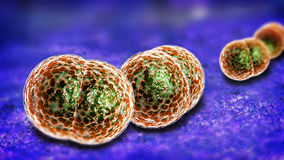 Infezione dei batteri di meningite Fotografie Stock
