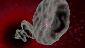 Infezione dei globuli con un virus pericoloso archivi video