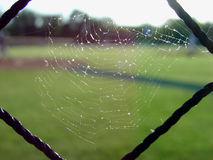 Infield Web. Sunlight thru spider web on infield fence Stock Images