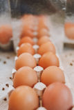 Infinitamente muitos ovos Fotos de Stock Royalty Free