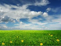 Infinite meadow from flowers Royalty Free Stock Photo