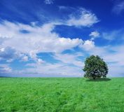 Infinite meadow and tree Royalty Free Stock Photo