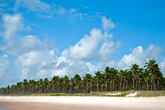 Infinite palms at beach Royalty Free Stock Image