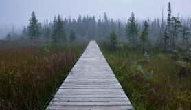 Infinite path. Wooden path, through a swampy area,with lots of vegetation around Royalty Free Stock Image