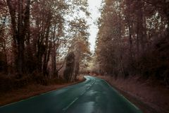 Infinite road through a forest in autumn Stock Photo