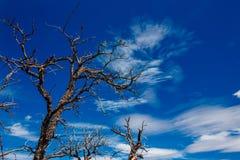 The infinite tree. Stock Photo