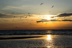 Infinity, journey, direction, Russia, Seagull, bird, clouds, sunbeam, dusk, sunset, reflection, ripples Stock Photography