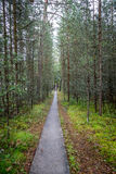 Infinity perspective of walking trail in a pine forest. Royalty Free Stock Photos