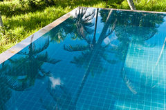 Infinity pool. An infinity pool with the reflection of palm trees Stock Photo