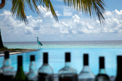 Infinity Pool bar! Royalty Free Stock Images