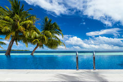 Infinity pool with coco palms stock photo