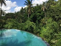 Infinity pool next to the jungle stock photo