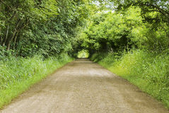 Infinity road illusion. Surrounding with trees Royalty Free Stock Photography