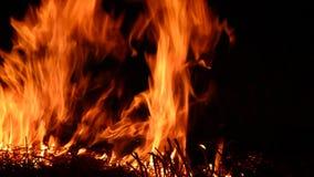 Inflamando o fogo isolado no fundo preto vídeos de arquivo