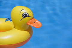 Inflatable Duck in Swimming Pool stock images