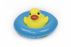 Inflatable toy in the swimming pool , Duck swim tube isolated for Summer stock photos