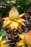 Inflorescence of a banana Stock Photo