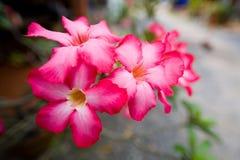 Inflorescence de belles fleurs exotiques avec les pétales rouges Photo libre de droits