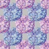 Inflorescence Hydrangea randomly arranged in seamless pattern, vector illustration in hand drawing style. Royalty Free Stock Photography