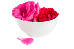 Inflorescences roses in a white cup Stock Photos