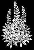 Inflorescencia de lupines Imágenes de archivo libres de regalías