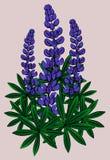 Inflorescencia de lupines Vector Imagen de archivo libre de regalías