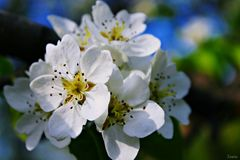 Inflorescencia hermosa Foto de archivo libre de regalías