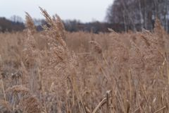 Inflorescencias secadas de las plantas 007 fotos de archivo libres de regalías
