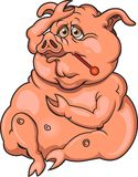 influensaswine Arkivbild
