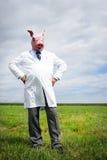influensaswine Royaltyfria Bilder