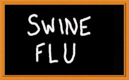 influensaswine Arkivbilder