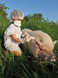 Influenza di riossidazione dei maiali Fotografia Stock Libera da Diritti