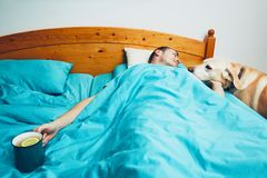 Sick man in the bed. Influenza season. Sick man under blanket is holding cup of the hot tea and looking on his dog royalty free stock images