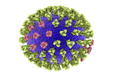 Influenza virus illustration. Influenza virus. 3D illustration showing surface glycoprotein spikes hemagglutinin green and neuraminidase purple Stock Images
