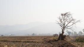 Influenze di riscaldamento globale all'agricoltura del riso della terra asciutta Fotografia Stock