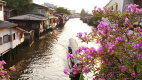 Influx Chao Phraya River Boat Sunset 4k. Boat on the tributary of the Chao Phraya river in the suburbs of Bangkok at sunset with blossoming spring bright stock video footage