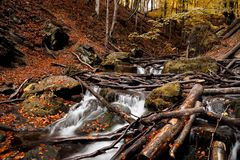 The influx of a mountain waterfall heaped with broken trees. After the storm Stock Photos